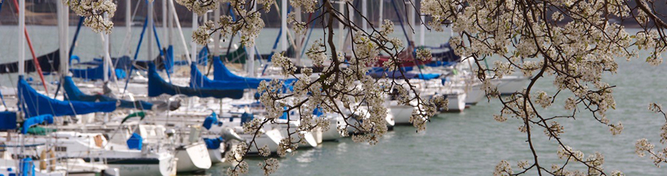 Spring view of sailboats in their slips