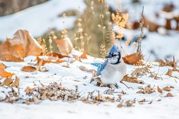 Bird and leaves photo by Laura Frazier