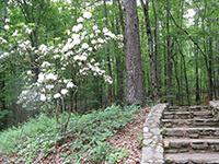 Laurel Ridge Hiking trail
