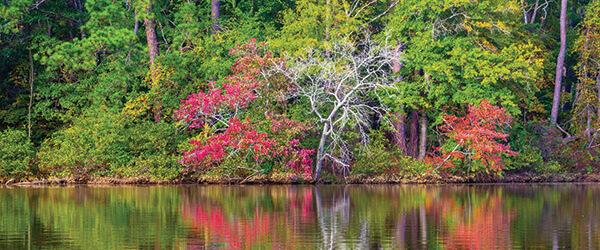 Reflections on Lake Rutledge