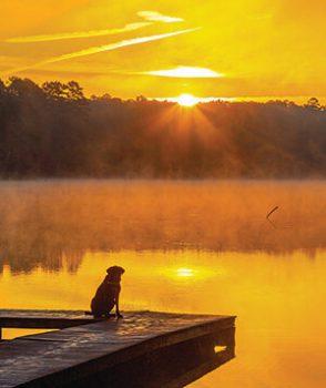 Dog, Yogi watching the sun rise