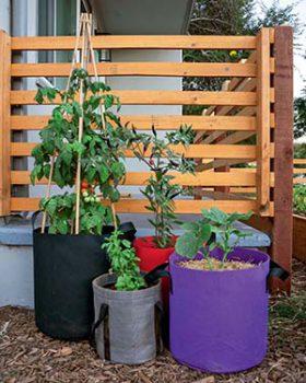 A grow bag garden