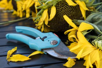 Blue-handled garden pruning sheers