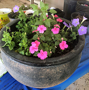 Impatiens and Petunias in a clay pot