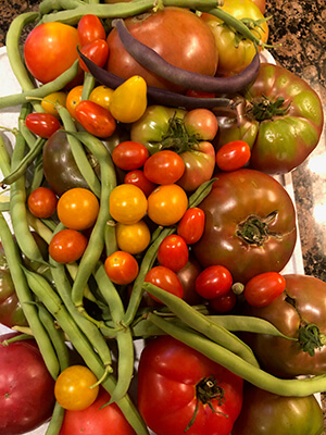 closeup of colorful vegetables fresh from Pamela Keene's garden - green beans, tomatoes