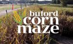 Buford Corn Maze text with corn field in background