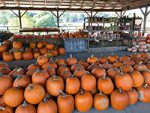 Pumpkins stacked up in open air store at Kinsey Family Farm