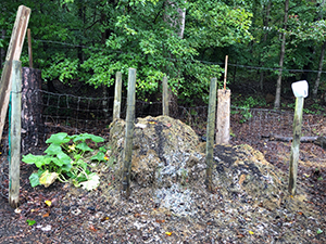A compost pile enclosed with fence posts and wire on three sides.