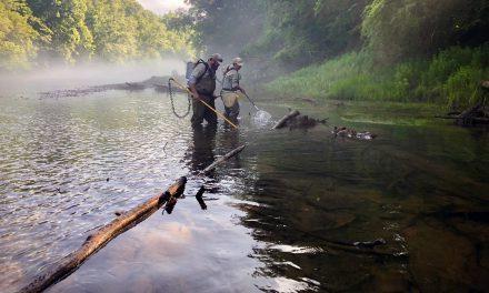 Riparian buffers: key to Lanier's water quality